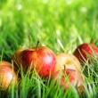 Red apples on green grass — Stock Photo #36290079