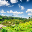 Ricce terrace of Bali Island, Indonesia — Foto de Stock