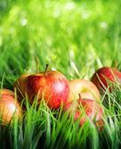 Rote Äpfel auf grünem Gras — Stockfoto