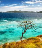 White sand beach. Malcapuya island, Philippines — Foto de Stock