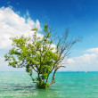 图库照片: Tree growing in the water
