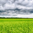 Stock Photo: Stormy sky over green field