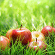 Red apples on green grass — Stock Photo