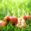 Red apples on green grass — Stock Photo #38773153