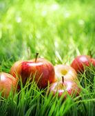 красные яблоки на зеленой траве. — Стоковое фото