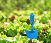 Blaue kugel und grünen salat — Stockfoto