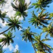 Palm trees against blue sky — Stock Photo #39766479