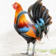 Colourful rooster walking in a farm — Stock Photo