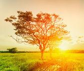 Ett träd i solnedgång. sommar landskap — Stockfoto