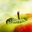 Green caterpillar on red apple — Stock Photo