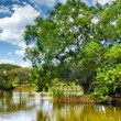 Tranquil pond in summer park — Stock Photo #41538289