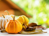 Pumpkins on rural landscape background — Stock Photo