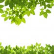 Green Leaves Border on white background — Stock Photo