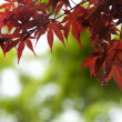 Autumn leaves very shallow focus on green bokeh background — Stock Photo #50706925