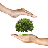 A Tree in human hands on white background — Stock Photo