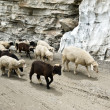 Sheeps — Stock Photo #12597096