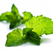 Mint — Stock Photo #13428742