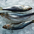Herring — Stock Photo #14034421