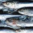 Herring — Stock Photo #14369595