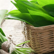 Wildgarlic — Stock Photo