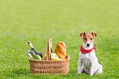 пикник — Стоковое фото