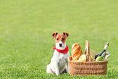 Picknick — Stockfoto