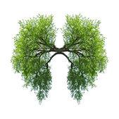 肺 — 图库照片