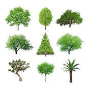 дерево — Стоковое фото
