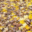 Leaves — Stock Photo #30461497