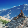Stockfoto: Mountain top