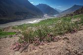 Himalayas — Stock Photo