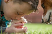 Boy with hamster — Stock Photo