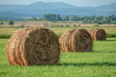 A hay — Stock Photo