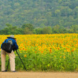 Photographer take a photo at sunflower field — Stock Photo
