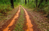 Clay road in forest — Stock Photo