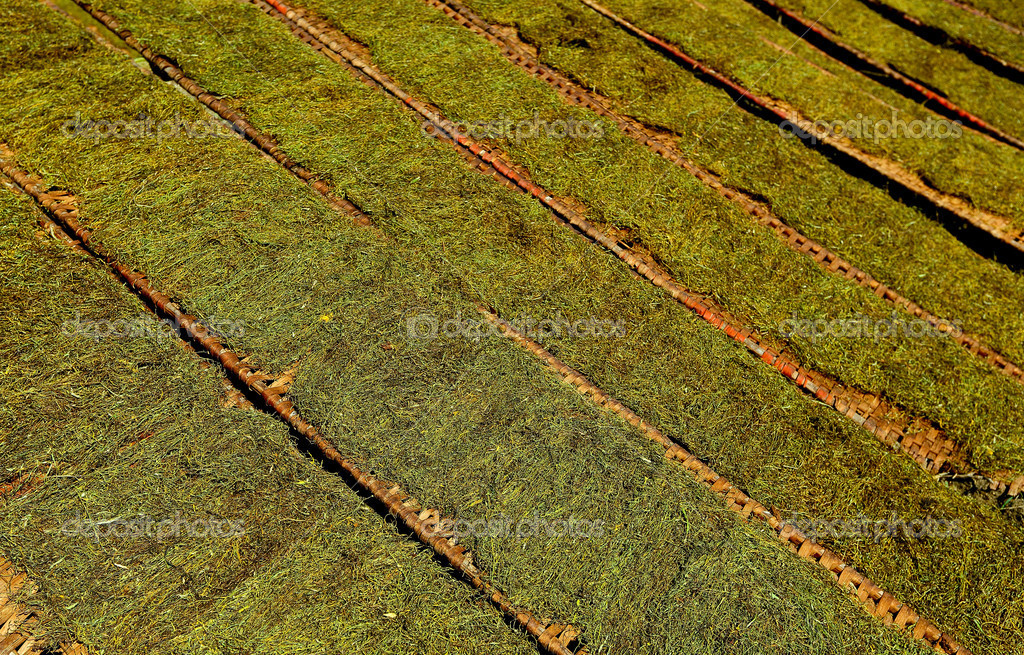 Tobacco lines dried — Stock Photo #19913155