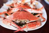 Blue crabs — Stock Photo