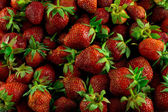 Fresh raw lot of strawberries — Zdjęcie stockowe