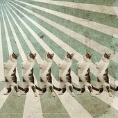 ダンス猫レトロ ポスター — ストック写真