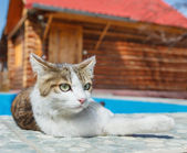 Cat lying down outdoor — Stock Photo