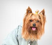 Dog funny — Fotografia Stock
