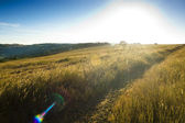Sunset over agricultural yellow field — Stockfoto