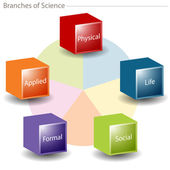 Branches of Science Chart — Stock Vector