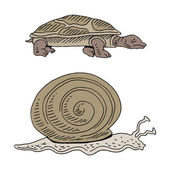 Turtle and Snail Race — Stock Vector