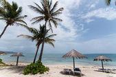 Uma praia das caraíbas soalheira com espreguiçadeiras e guarda-sóis — Fotografia Stock