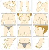 Man body parts — Stock Vector