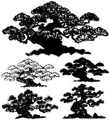 Japanese pine tree. — Stock Vector