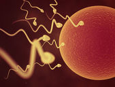 Sperm cells and Egg — Stock Photo