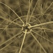 The brain neurons and nervous system — Foto Stock