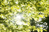 Green leafs with sun ray — Stock Photo